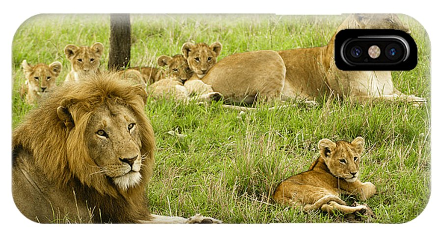 Lion IPhone X Case featuring the photograph It's All About Family by Michele Burgess