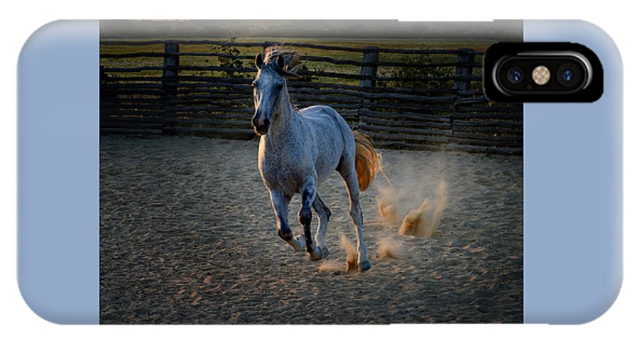 New Horse Pictures IPhone X Case featuring the photograph Jonno by Fay Geddes
