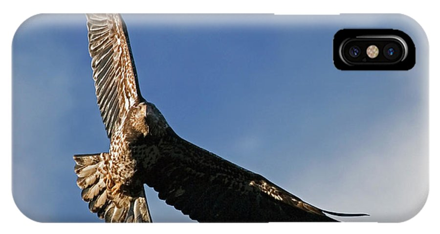 Bald Eagle IPhone X Case featuring the photograph Juvenile Bald Eagle by Randall Ingalls