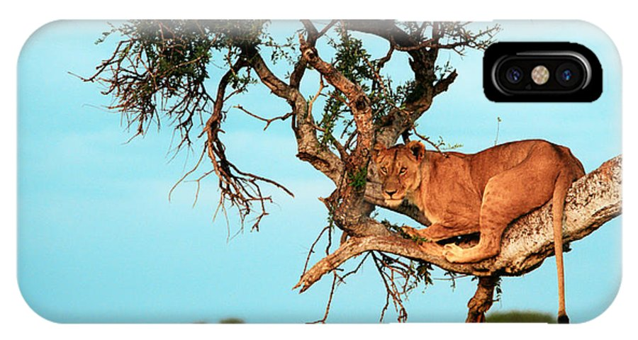 Africa IPhone X Case featuring the photograph Lioness In Africa by Sebastian Musial