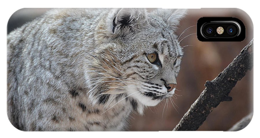 Bobcat IPhone X Case featuring the photograph Lynx In A Crouch Ready To Pounce by DejaVu Designs