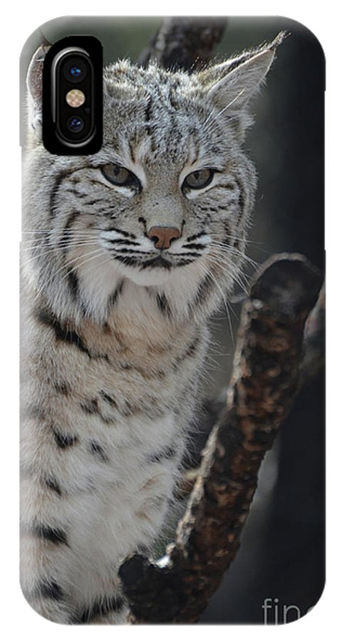 Bobcat IPhone X Case featuring the photograph Lynx Perched In A Tree by DejaVu Designs