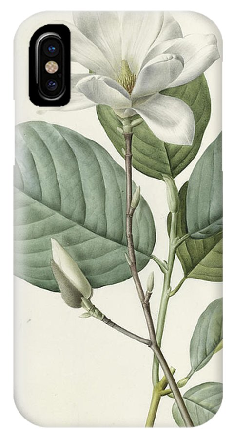 Magnolia IPhone X Case featuring the painting Magnolia by Pierre Joseph Redoute