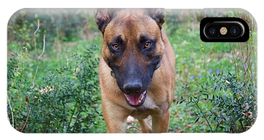 Belgian Malinois IPhone X Case featuring the photograph Malinois by Photos By Zulma