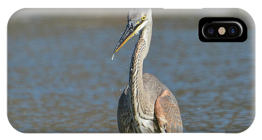 Great Blue Heron IPhone X Case featuring the photograph Mini Meal by Fraida Gutovich