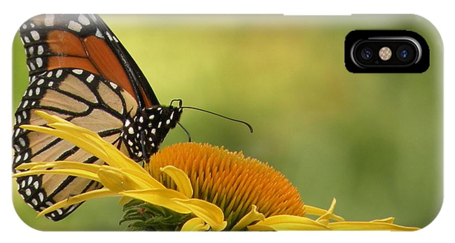 Monarch IPhone X Case featuring the photograph Monarch Butterfly by Joanne Young