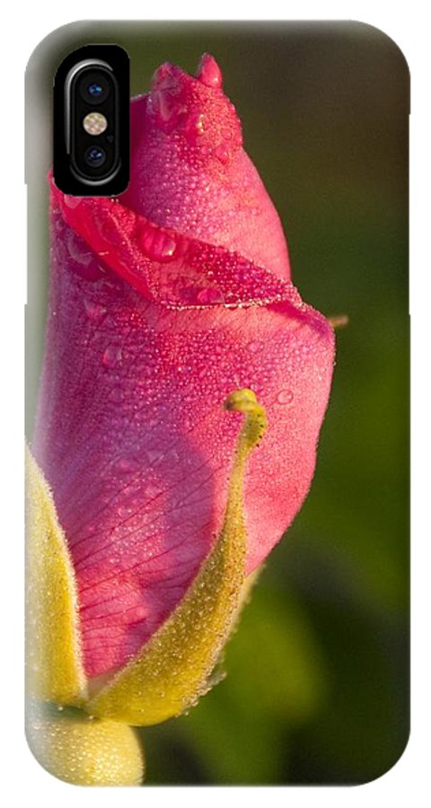 Dew IPhone X Case featuring the photograph Morning Dew by Steven Natanson