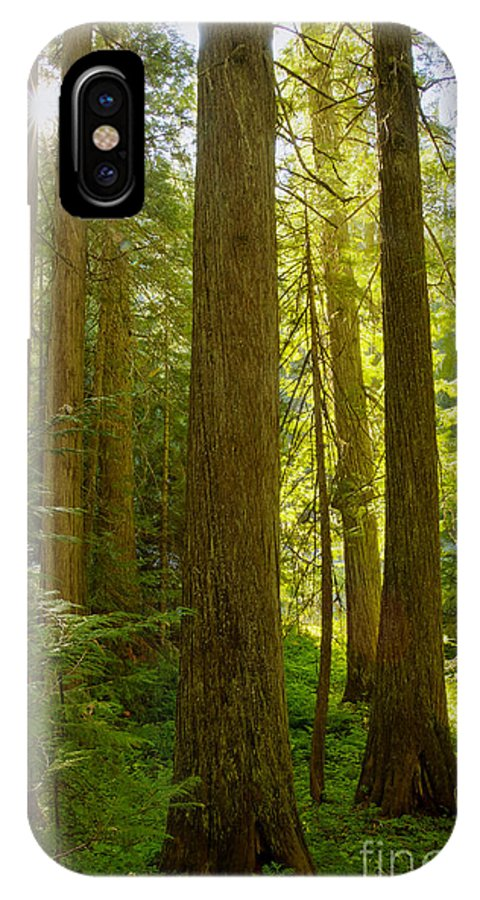 Clearwater National Forest IPhone X Case featuring the photograph Morning In Devoto by Idaho Scenic Images Linda Lantzy