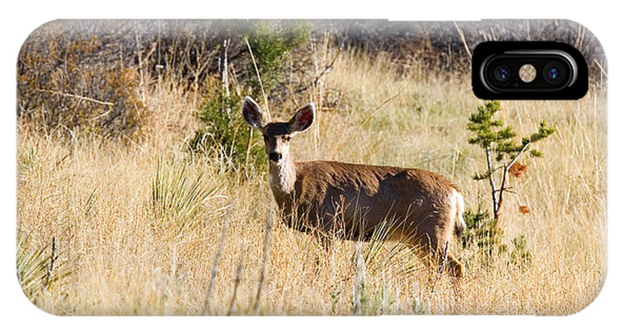 Deer IPhone X Case featuring the photograph Mule Deer In Garden Of The Gods by Steve Krull