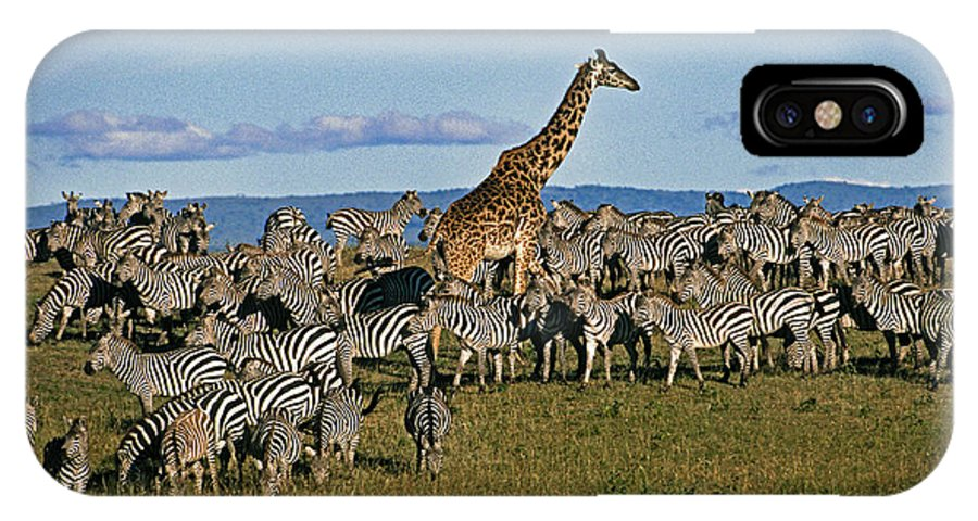 Africa IPhone X Case featuring the photograph Odd Man Out by Michele Burgess