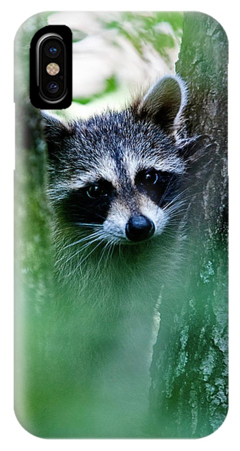 Racoon IPhone X Case featuring the photograph On Watch by Christopher Holmes