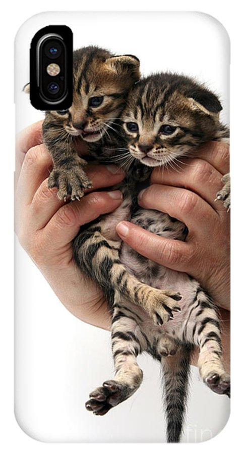 Cat IPhone X Case featuring the photograph One Week Old Kittens by Yedidya yos mizrachi
