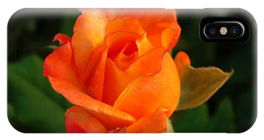 Rose IPhone X Case featuring the photograph Orange Rose by Sandy Keeton