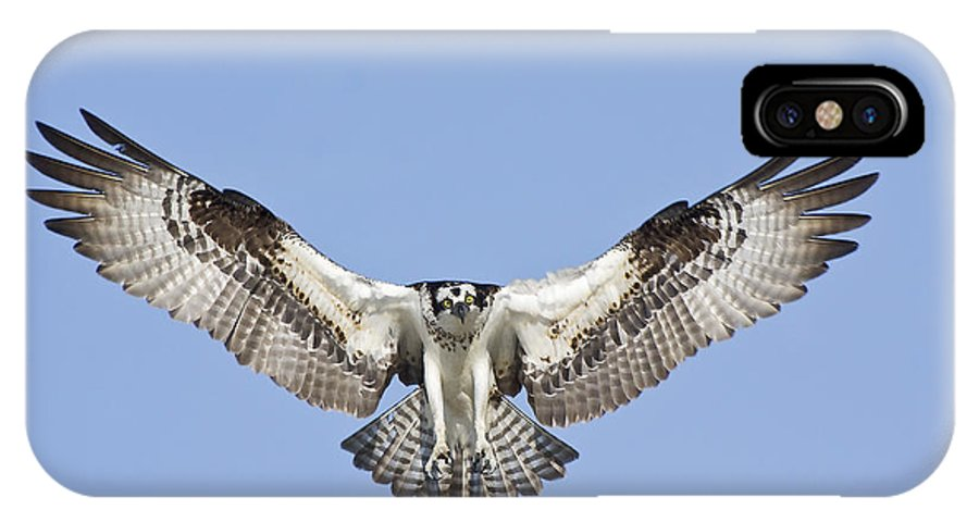 Osprey IPhone X Case featuring the photograph Osprey In Flight by Bob Decker