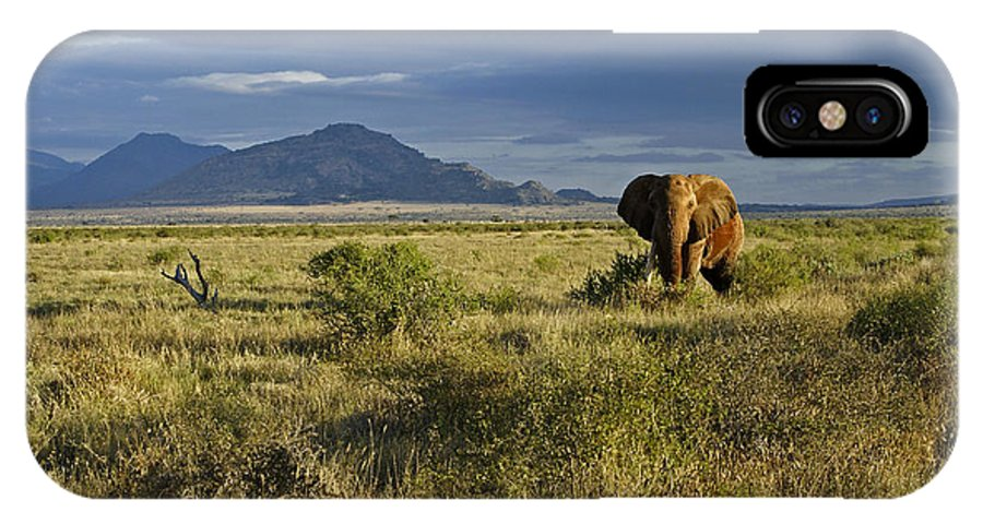 Africa IPhone X Case featuring the photograph Patriarch Of The Plains by Michele Burgess