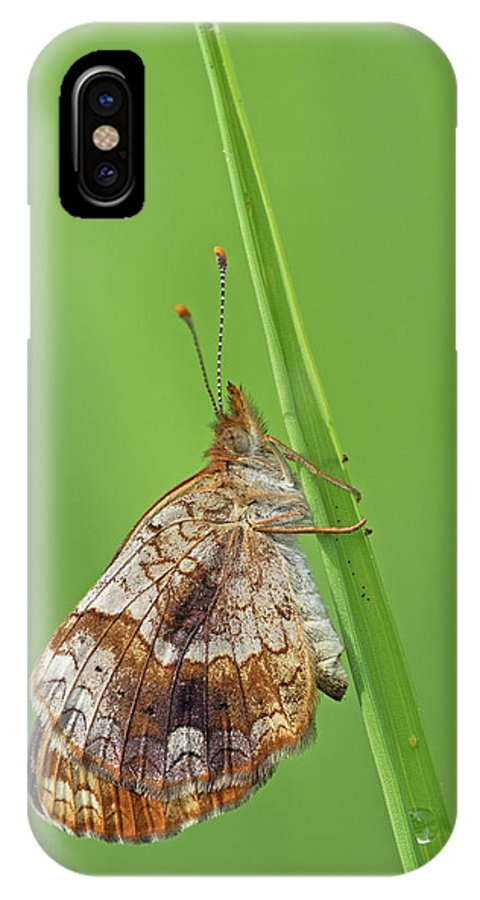 Pearl Crescent IPhone X Case featuring the photograph Pearl Crescent by Jim Zablotny