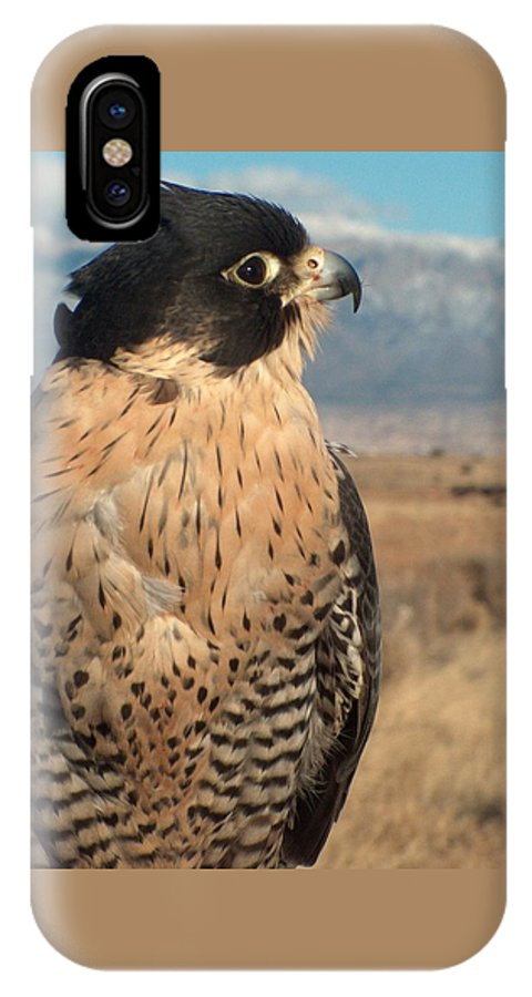 Peregrine Falcon IPhone X Case featuring the photograph Peregrine Falcon by Tim McCarthy