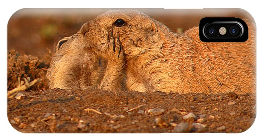 Prairie Dog IPhone X Case featuring the photograph Prairie Dog Tender Sunset Kiss by Max Allen