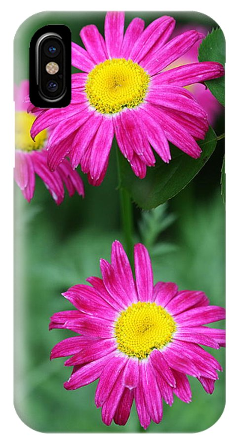 Daisy IPhone X Case featuring the photograph Pretty In Pink by Paul Slebodnick