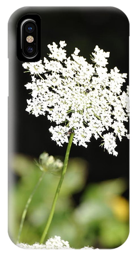 Queen Anne's Lace Photograph IPhone X Case featuring the photograph Queen Anne by Penny Neimiller