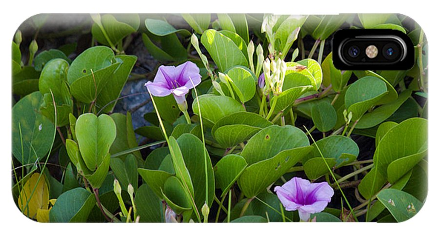 Railroad; Vine; Morning; Glory; Ipomoea; Pes-caprae; Pes; Caprae; Flower; Florida; Shore; Beach; Bea IPhone X Case featuring the photograph Railroad Vine by Allan Hughes