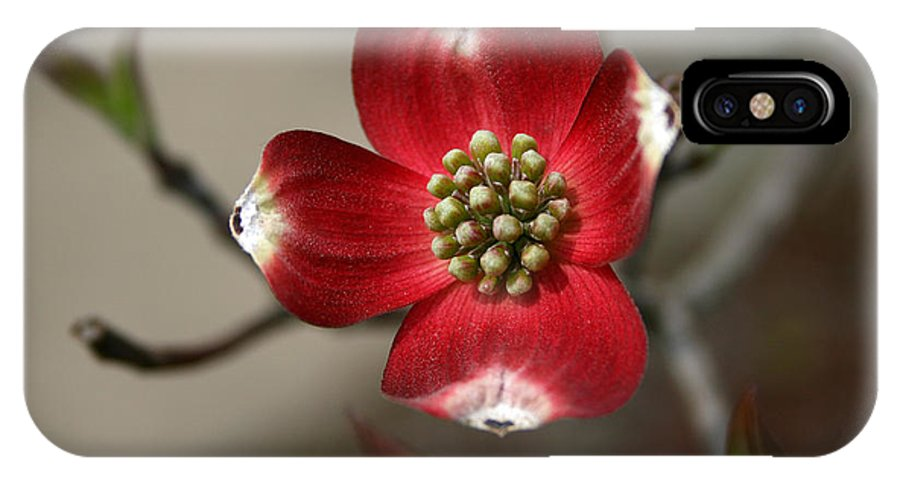 Flower IPhone X Case featuring the photograph Red Dogwood by Andrei Shliakhau
