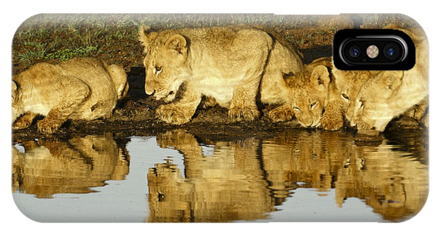 Lion IPhone X Case featuring the photograph Reflected Lions by Michele Burgess