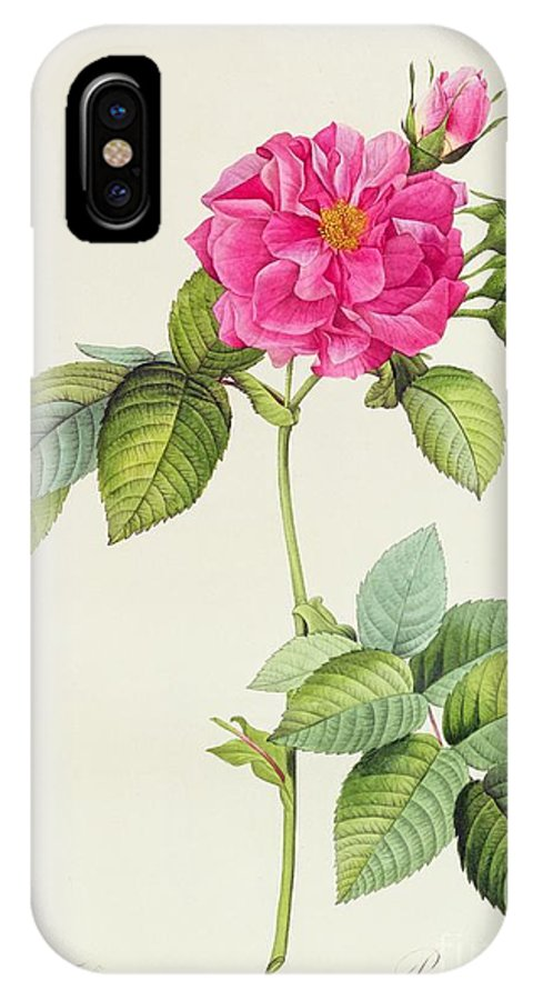 Rosa IPhone X Case featuring the drawing Rosa Turbinata by Pierre Joseph Redoute