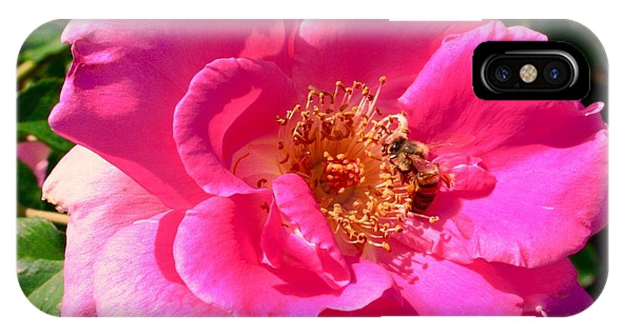 Rose Bee IPhone X Case featuring the photograph Rose Bee by Bennett Thompson