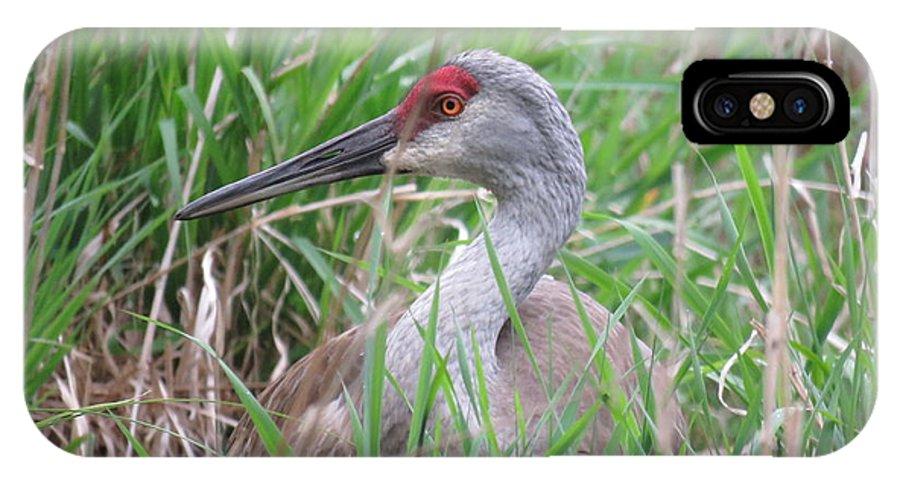 Sand Hill Crane IPhone X Case featuring the photograph Sand Hill Crane by Selma Glunn