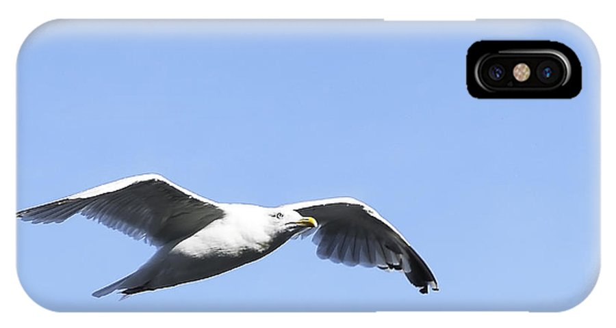 Bird IPhone X Case featuring the photograph Seagull by Svetlana Sewell