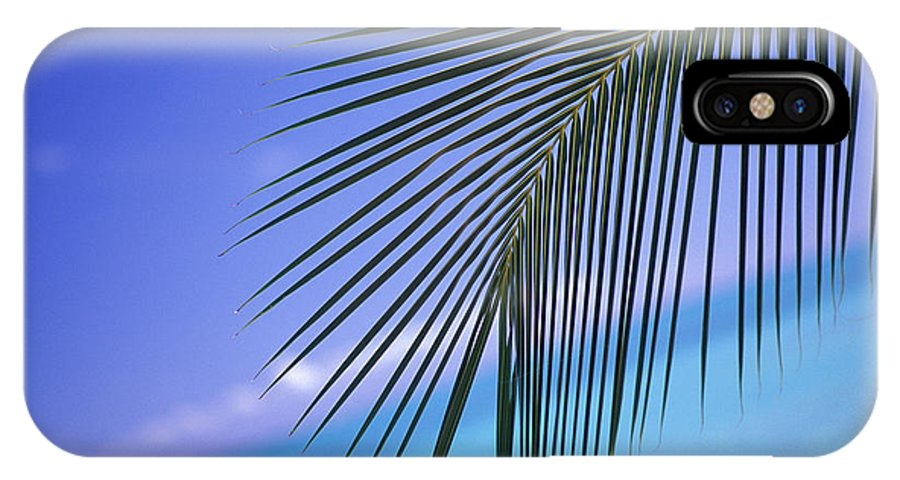 Afternoon IPhone X Case featuring the photograph Single Palm Frond by Dana Edmunds - Printscapes