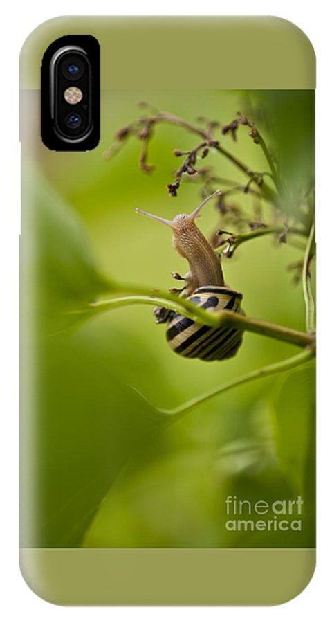 Pacific Northwest IPhone X Case featuring the photograph Snail Stretching by Jim Corwin