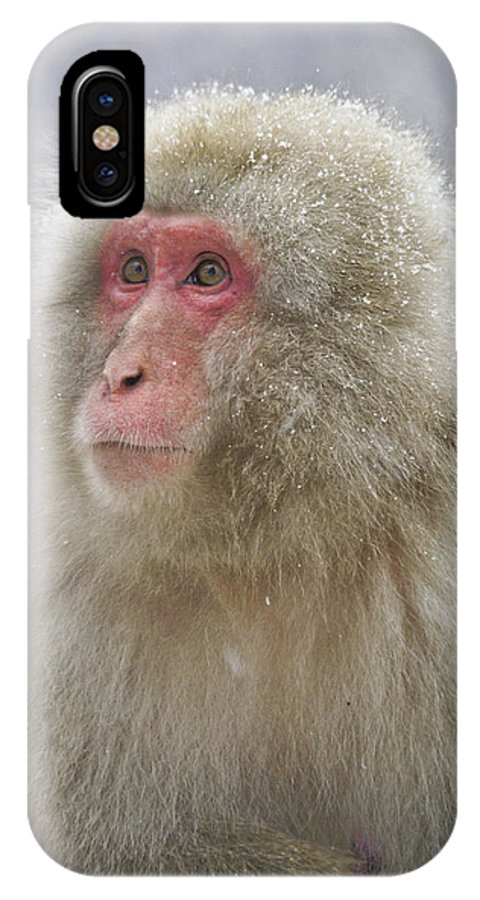 Japan IPhone X Case featuring the photograph Snow-dusted Monkey by Michele Burgess