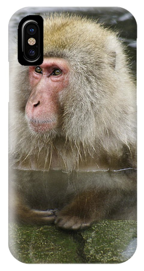 Snow Monkey IPhone X Case featuring the photograph Snow Monkey Bath by Michele Burgess