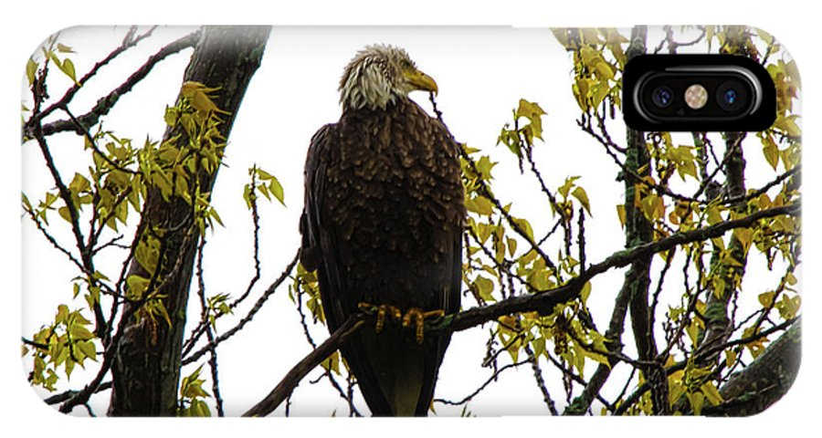 Eagle IPhone X Case featuring the photograph Stand Tall by Donald Crosby