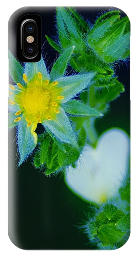Flowers IPhone X Case featuring the photograph Starflower by Ben Upham III
