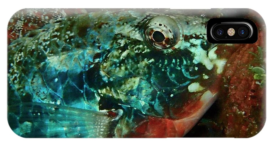 Macro Of Stop Light Parrot Fish Settling In For The Night Shift IPhone X / XS Case featuring the photograph Stop Light Parrot Fish by Nina Banks