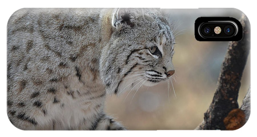 Bobcat IPhone X Case featuring the photograph Strolling Bobcat by DejaVu Designs