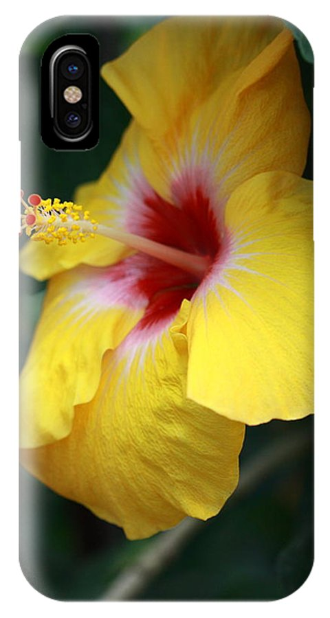 Flower IPhone X Case featuring the photograph Sun Shine by Paul Slebodnick