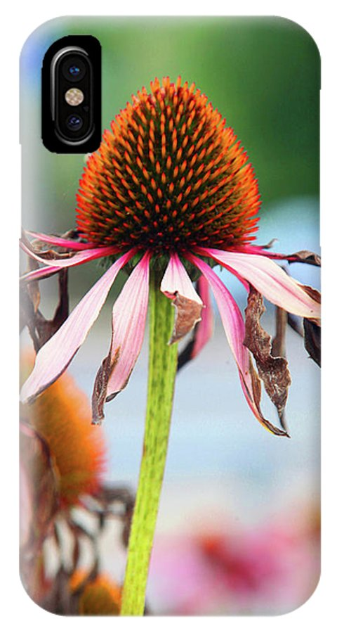 IPhone X Case featuring the photograph Take It Easy by Jez C Self