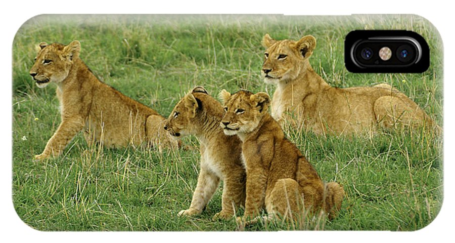 Lion IPhone X Case featuring the photograph The Four Musketeers by Michele Burgess