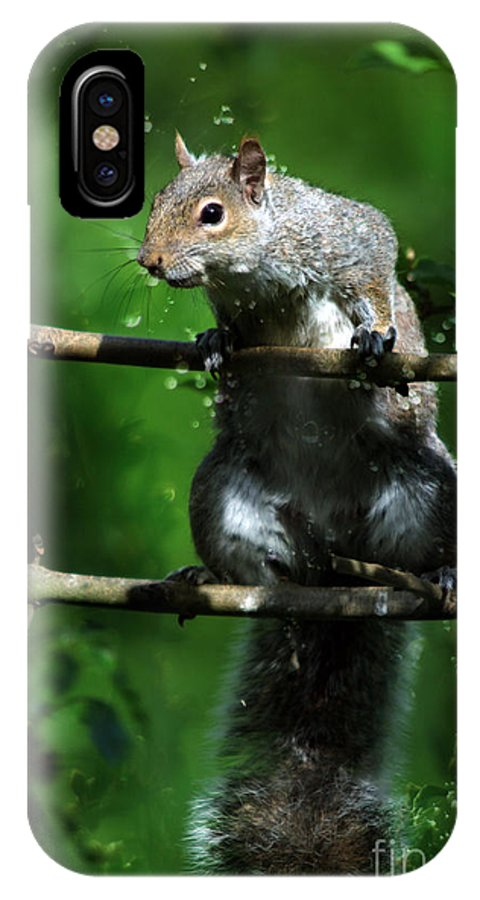 Squirrel IPhone X Case featuring the photograph The Squirrel From Fairyland by Angel Ciesniarska