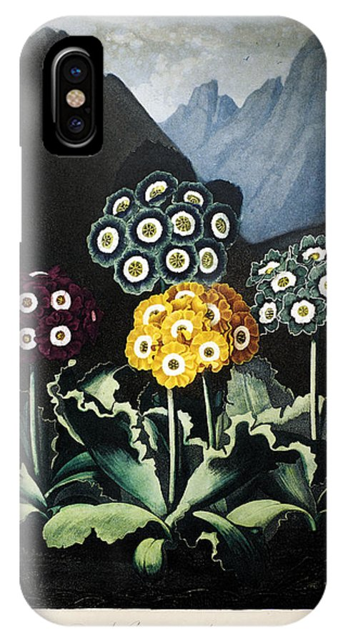 1807 IPhone X Case featuring the photograph Thornton: Auriculas by Granger