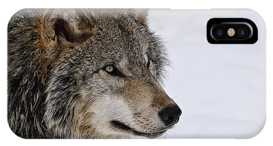 Michael Cummings IPhone X Case featuring the photograph Timber Wolf by Michael Cummings