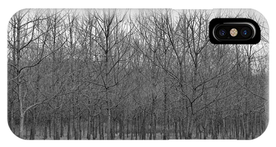 Tree IPhone Case featuring the photograph Trees In A Row by Shawn Wood