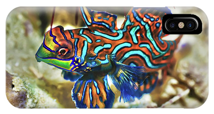 Mandarinfish IPhone X Case featuring the photograph Tropical Fish Mandarinfish by MotHaiBaPhoto Prints