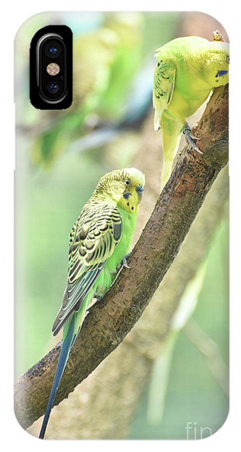 Budgie IPhone X Case featuring the photograph Two Adorable Budgie Parakeets Living In Nature by DejaVu Designs