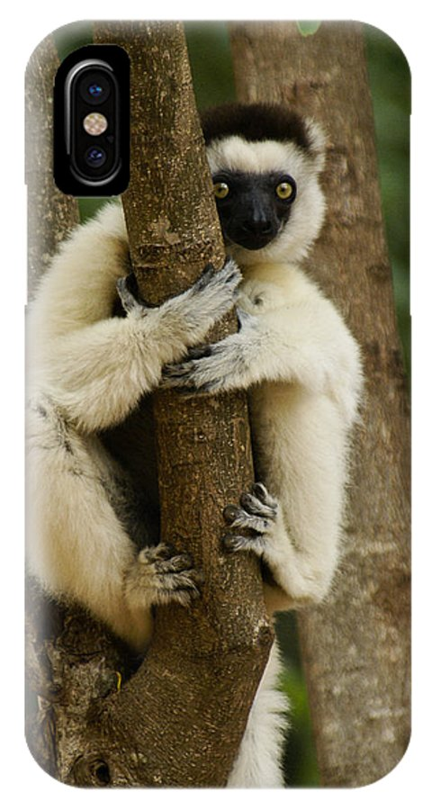 Madagascar IPhone X Case featuring the photograph Verreaux's Sifaka by Michele Burgess