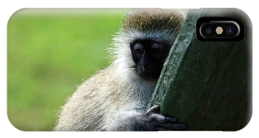 Ape IPhone X Case featuring the photograph Vervet Monkey by Aidan Moran
